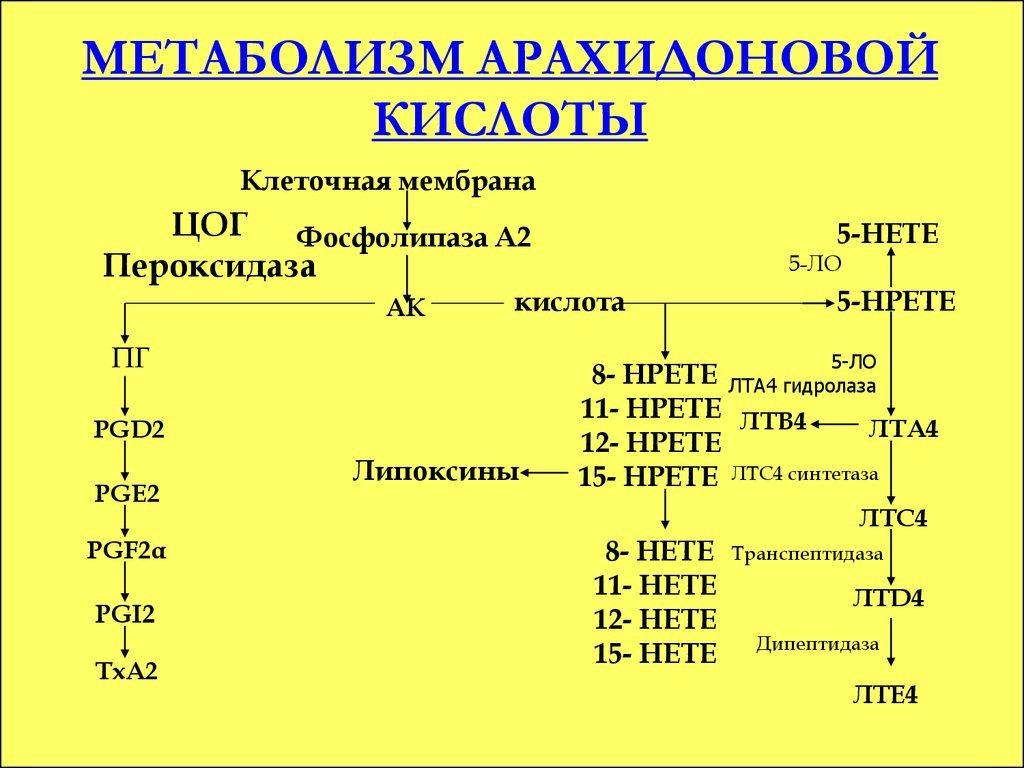 Метаболизм арахидоновой кислоты
