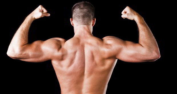 мышцы работают горизонтальная тяга
