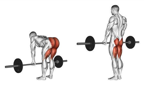 Целевые мышцы