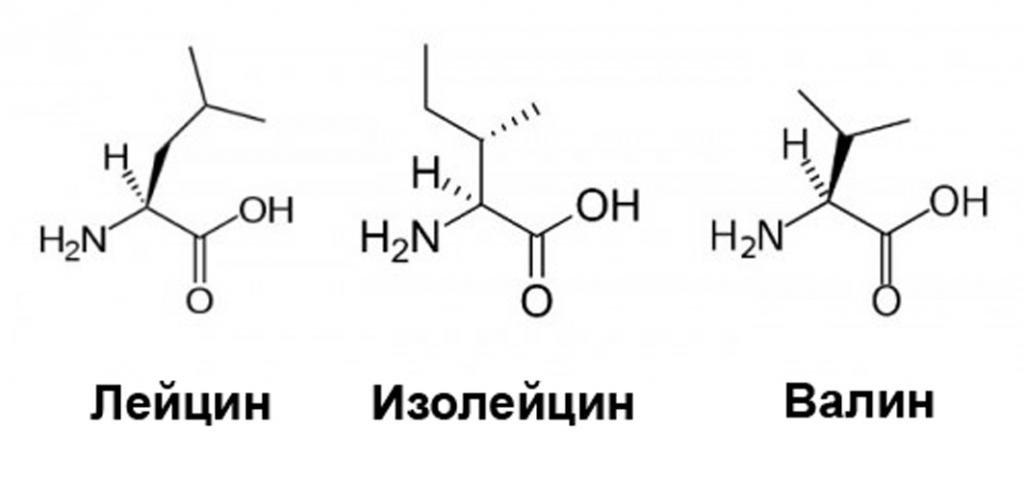 аминокислоты когда принимать до или после тренировки