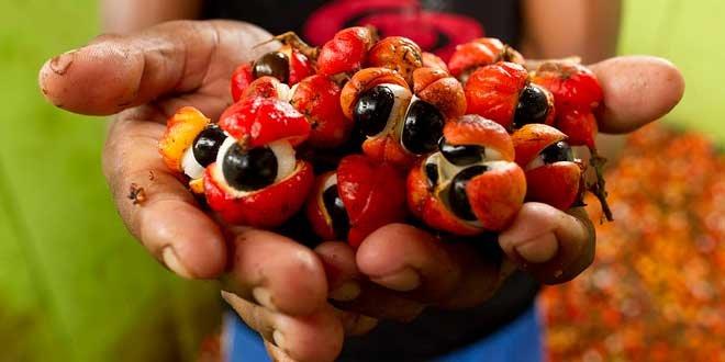 Семечки гуараны