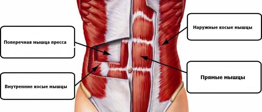 брюшные мышцы