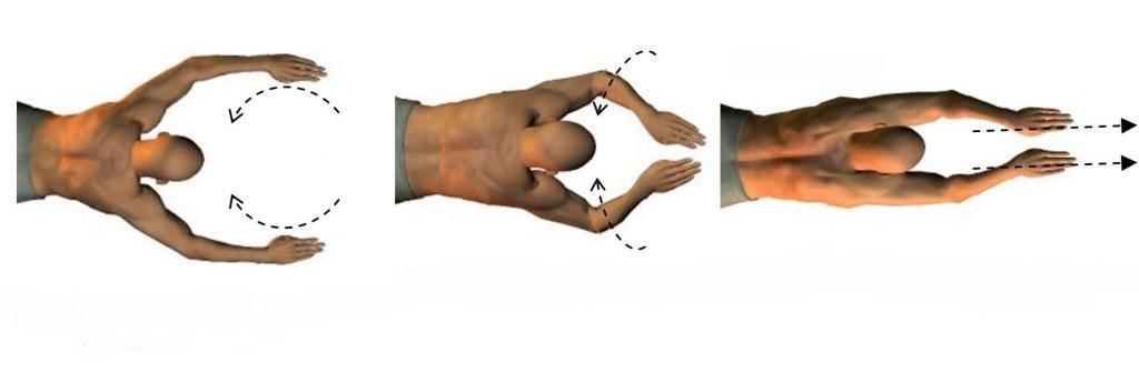 Основная часть гребка руками