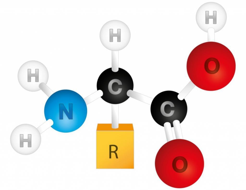 Строение аминокислот