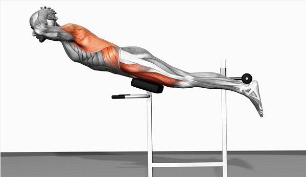 Нагружаемые при выполнении мышцы