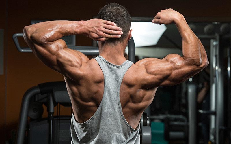 группы мышц